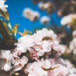 春に効く色彩心理