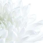 白の神秘性 ~色彩サプリ ゴッドホワイト~